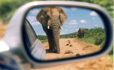 Elephants in Rearview